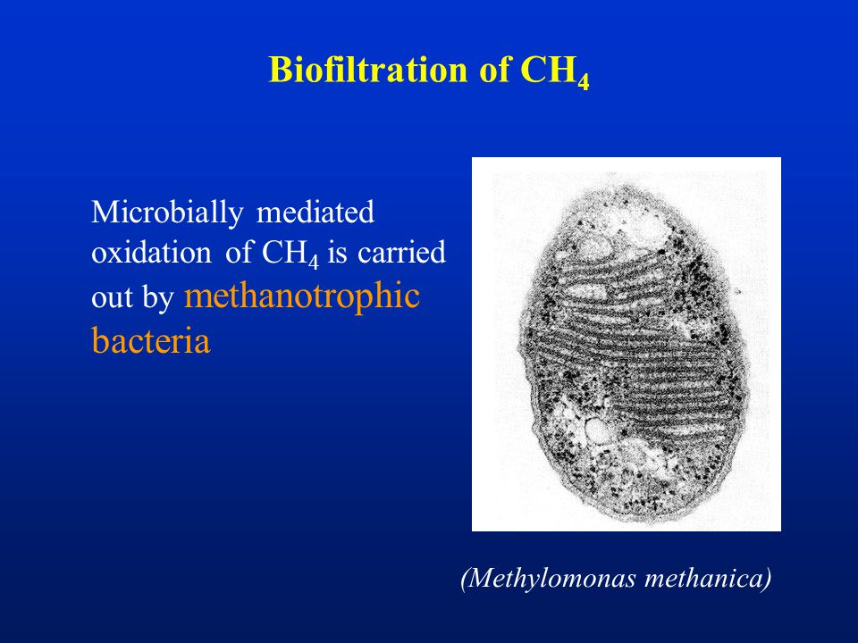 Biofiltration of CH 4 Microbially mediated oxidation of CH 4 is carried out by methanotrophic bacteria (Methylomonas methanica)