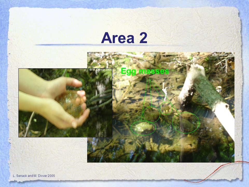 L. Senack and M. Divver 2005 Area 2 Egg masses © M. Divver 2005