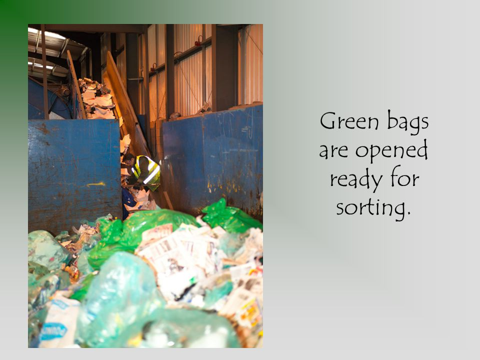 Green bags are opened ready for sorting.