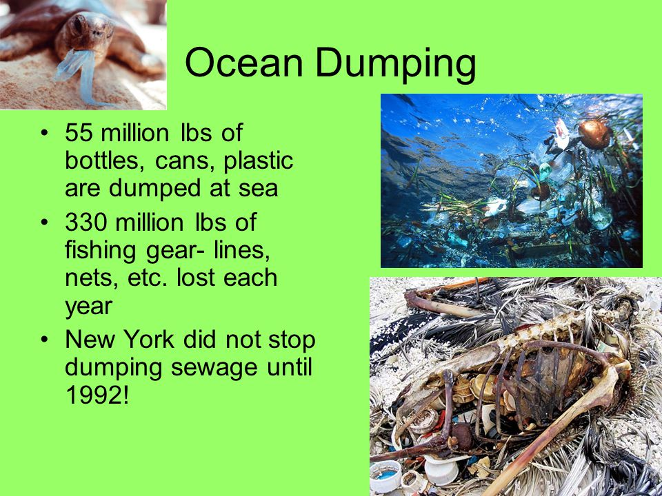 Ocean Dumping 55 million lbs of bottles, cans, plastic are dumped at sea 330 million lbs of fishing gear- lines, nets, etc. lost each year New York di