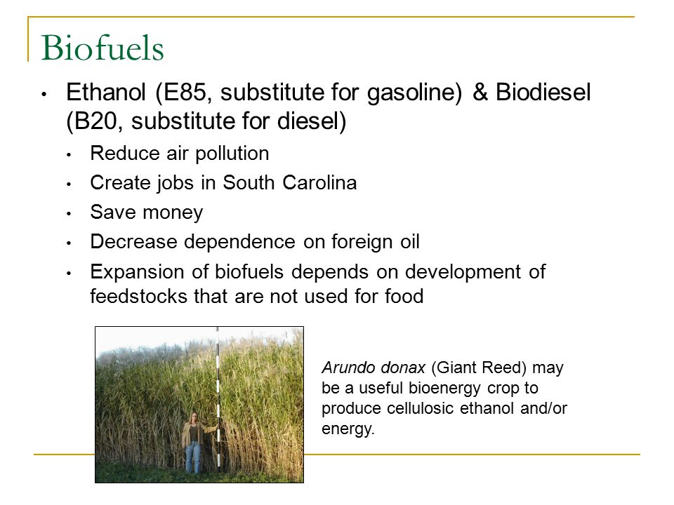 Biofuels Ethanol (E85, substitute for gasoline) & Biodiesel (B20, substitute for diesel) Reduce air pollution Create jobs in South Carolina Save money Decrease dependence on foreign oil Expansion of biofuels depends on development of feedstocks that are not used for food Arundo donax (Giant Reed) may be a useful bioenergy crop to produce cellulosic ethanol and/or energy.