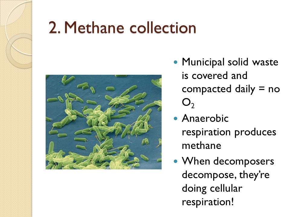 2. Methane collection Municipal solid waste is covered and compacted daily = no O 2 Anaerobic respiration produces methane When decomposers decompose,