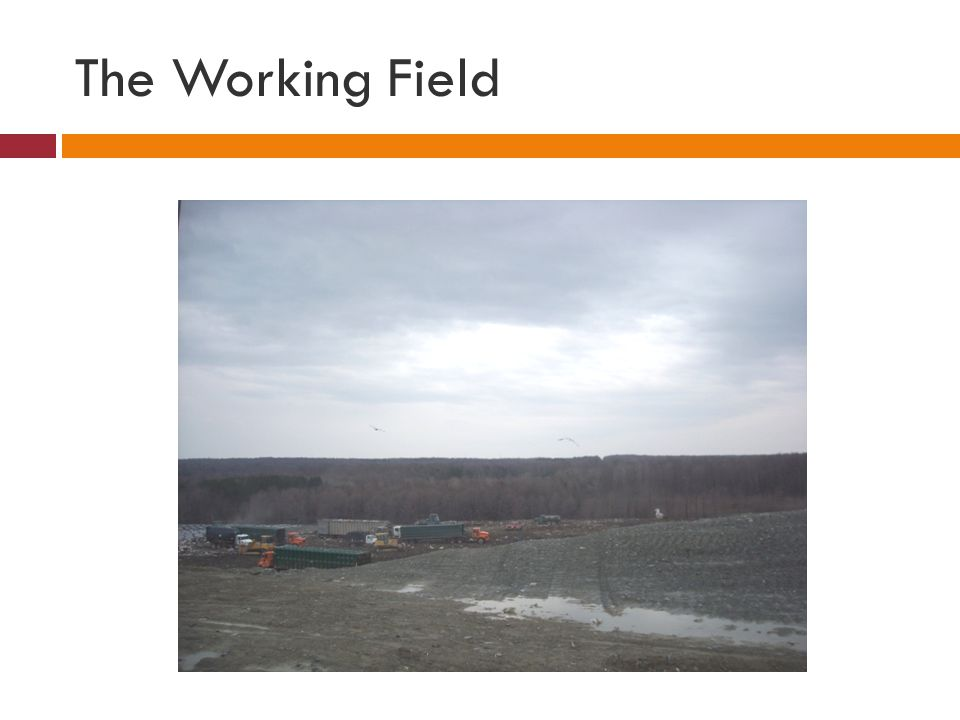 The Working Field