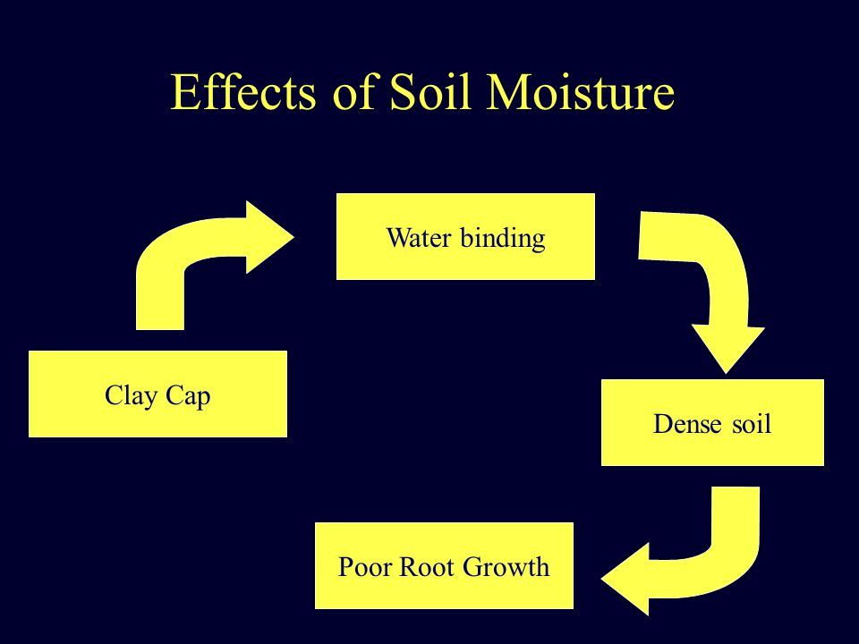 Effects of Soil Moisture Clay Cap Water binding Dense soil Poor Root Growth