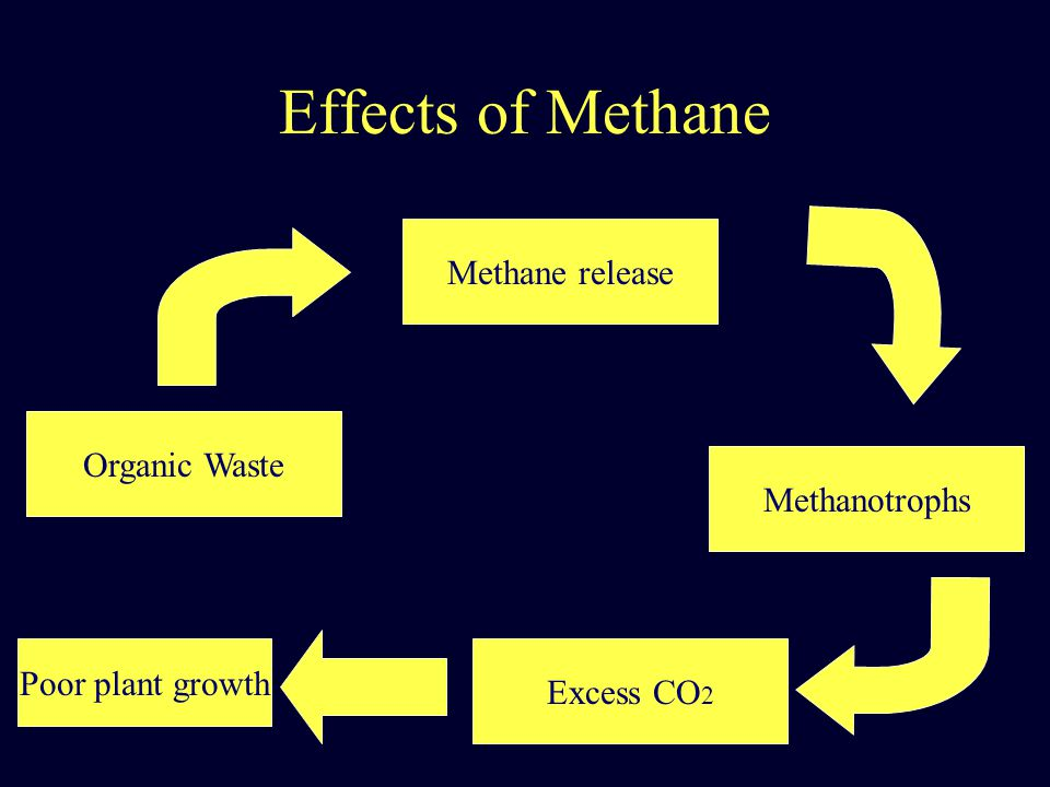 Effects of Methane Organic Waste Methane release Methanotrophs Excess CO 2 Poor plant growth