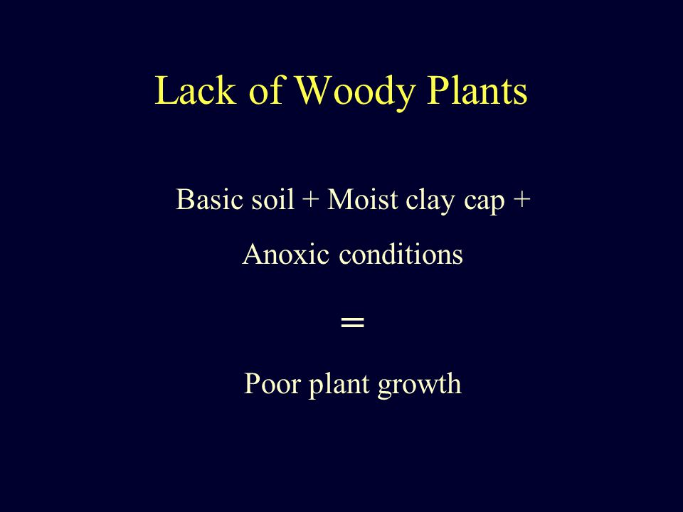 Lack of Woody Plants Basic soil + Moist clay cap + Anoxic conditions = Poor plant growth