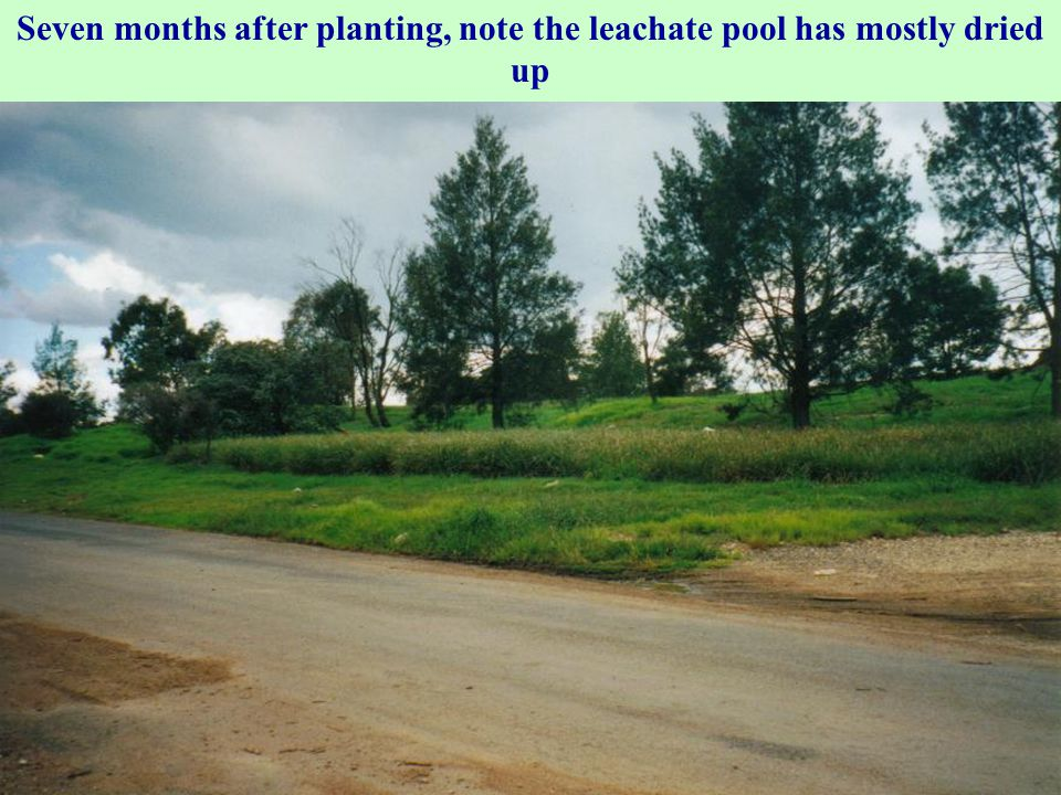Seven months after planting, note the leachate pool has mostly dried up