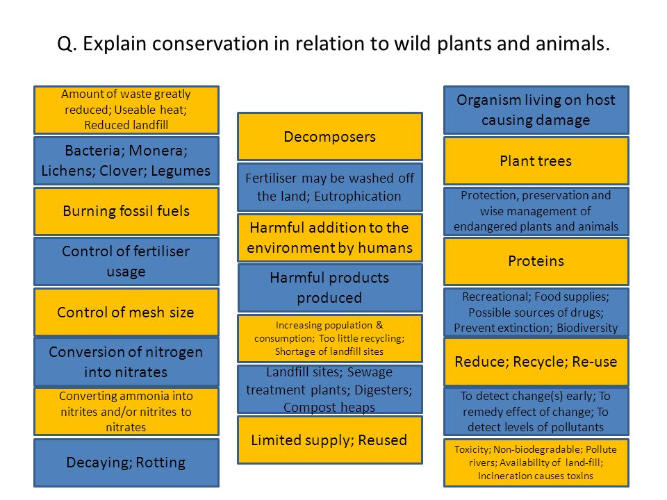 Q. Explain conservation in relation to wild plants and animals.
