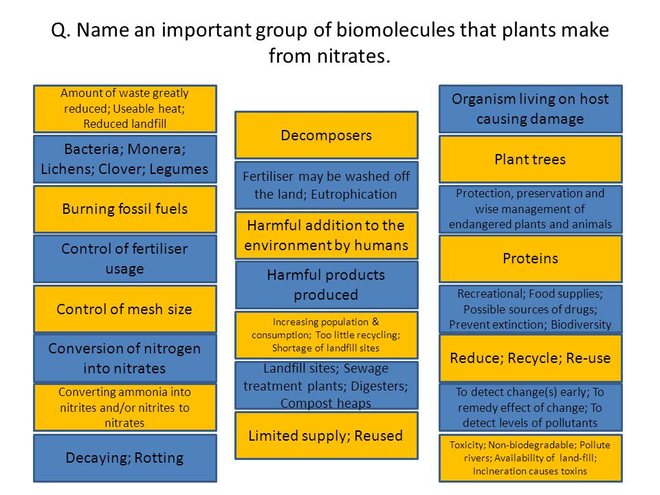 Q. Name an important group of biomolecules that plants make from nitrates.