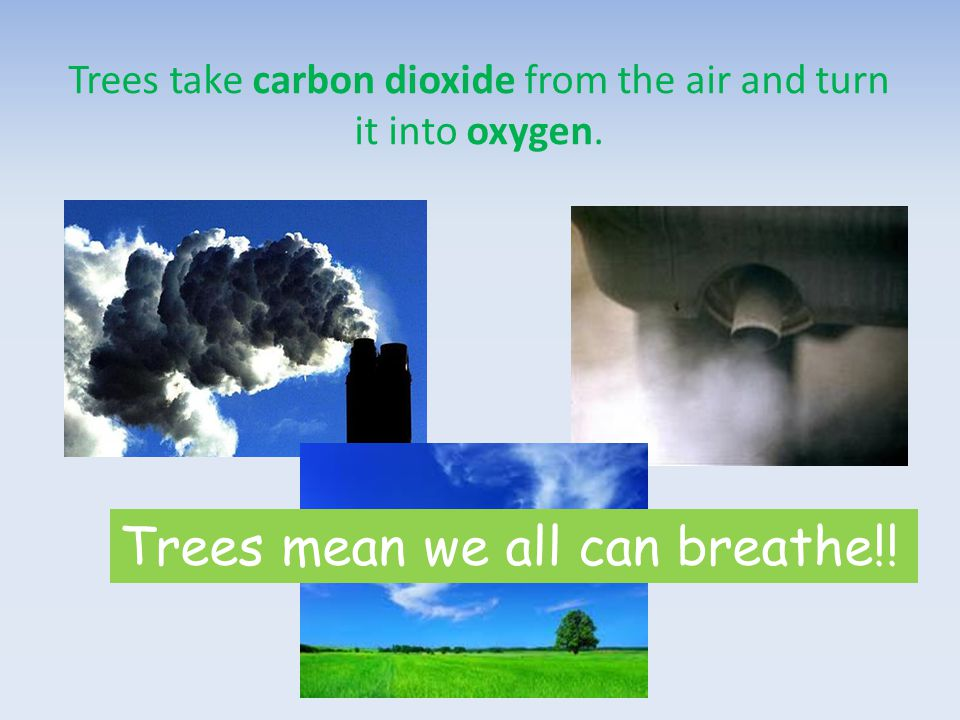 Trees take carbon dioxide from the air and turn it into oxygen. Trees mean we all can breathe!!
