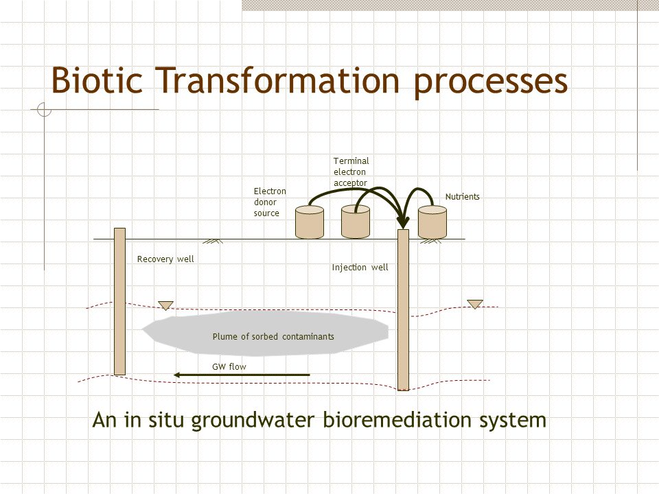 Biotic Transformation processes Plume of sorbed contaminants Electron donor source Recovery well Injection well An in situ groundwater bioremediation system GW flow Terminal electron acceptor Nutrients
