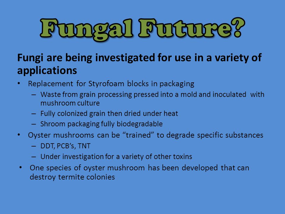 Fungi are being investigated for use in a variety of applications Replacement for Styrofoam blocks in packaging – Waste from grain processing pressed into a mold and inoculated with mushroom culture – Fully colonized grain then dried under heat – Shroom packaging fully biodegradable Oyster mushrooms can be trained to degrade specific substances – DDT, PCB's, TNT – Under investigation for a variety of other toxins One species of oyster mushroom has been developed that can destroy termite colonies