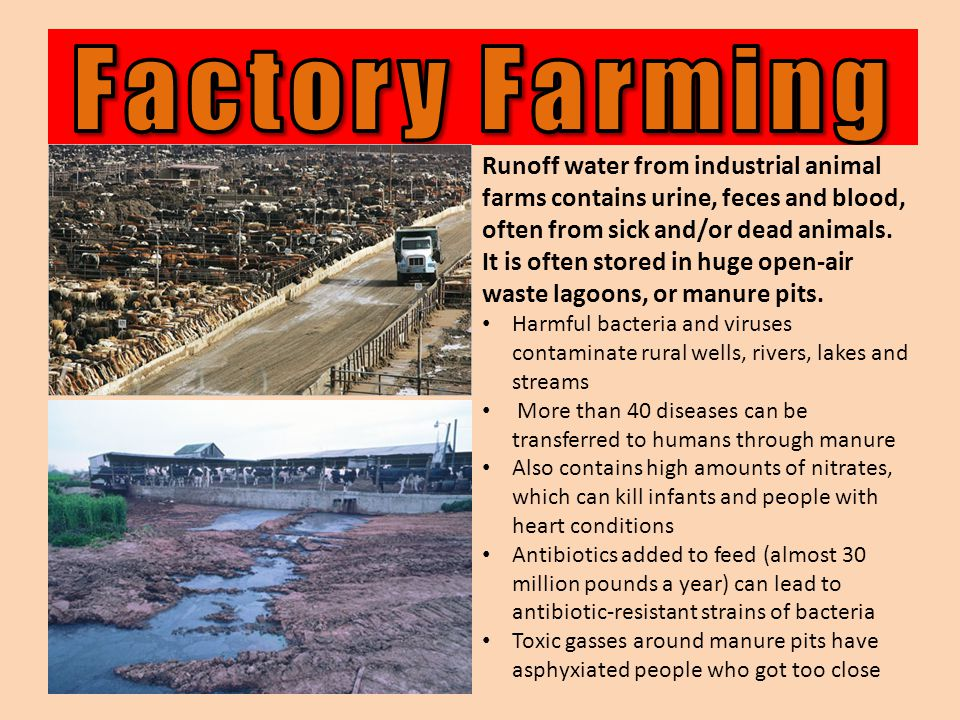 Runoff water from industrial animal farms contains urine, feces and blood, often from sick and/or dead animals.