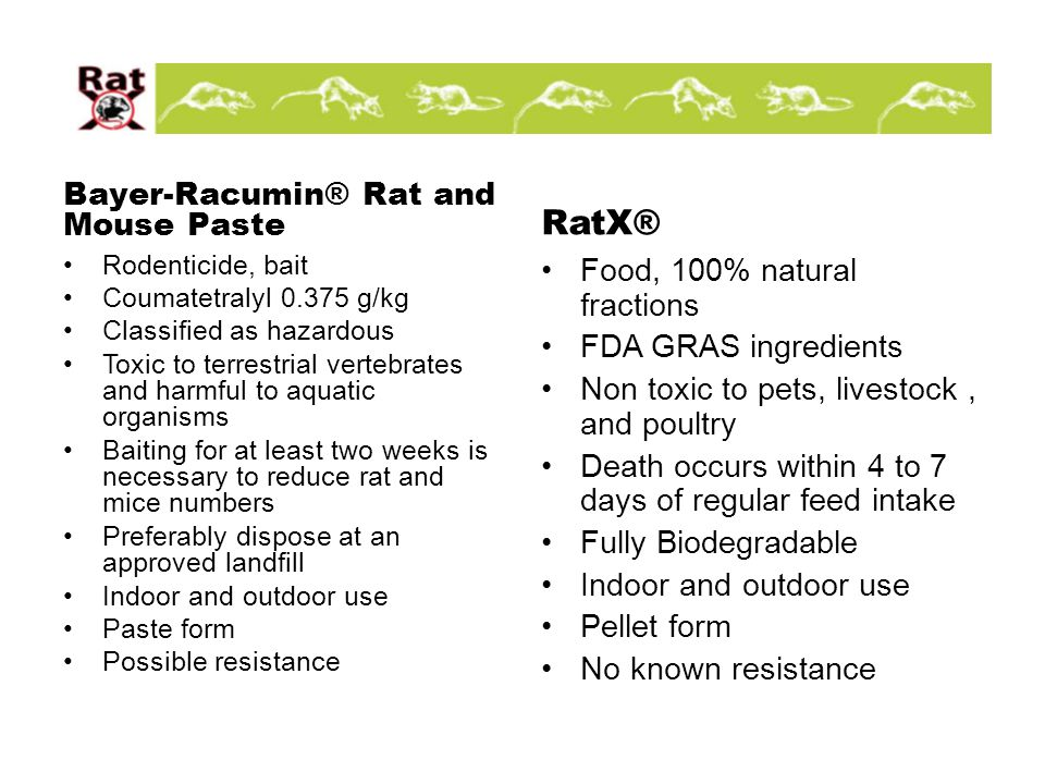 The Natural Way to Eradicate Rodents