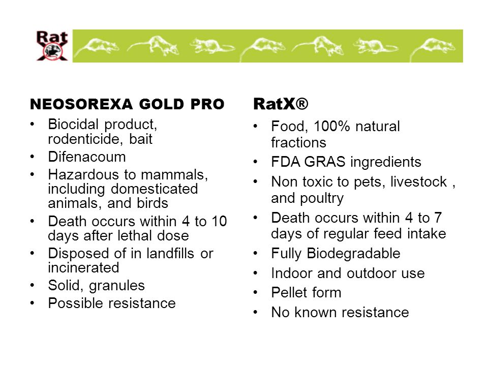 NEOSOREXA GOLD PRO Biocidal product, rodenticide, bait Difenacoum Hazardous to mammals, including domesticated animals, and birds Death occurs within 4 to 10 days after lethal dose Disposed of in landfills or incinerated Solid, granules Possible resistance RatX® Food, 100% natural fractions FDA GRAS ingredients Non toxic to pets, livestock, and poultry Death occurs within 4 to 7 days of regular feed intake Fully Biodegradable Indoor and outdoor use Pellet form No known resistance