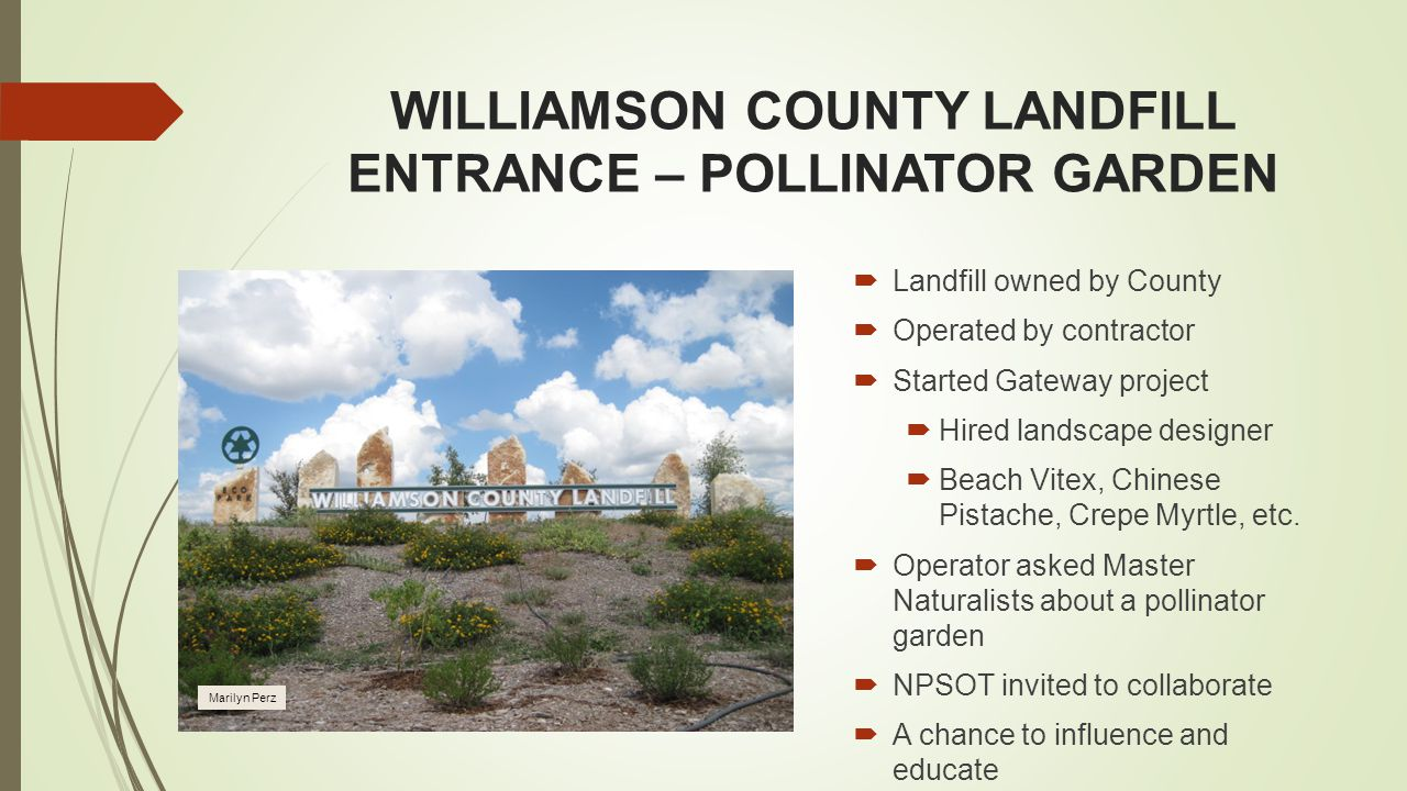 WILLIAMSON COUNTY LANDFILL ENTRANCE – POLLINATOR GARDEN  Landfill owned by County  Operated by contractor  Started Gateway project  Hired landscape designer  Beach Vitex, Chinese Pistache, Crepe Myrtle, etc.