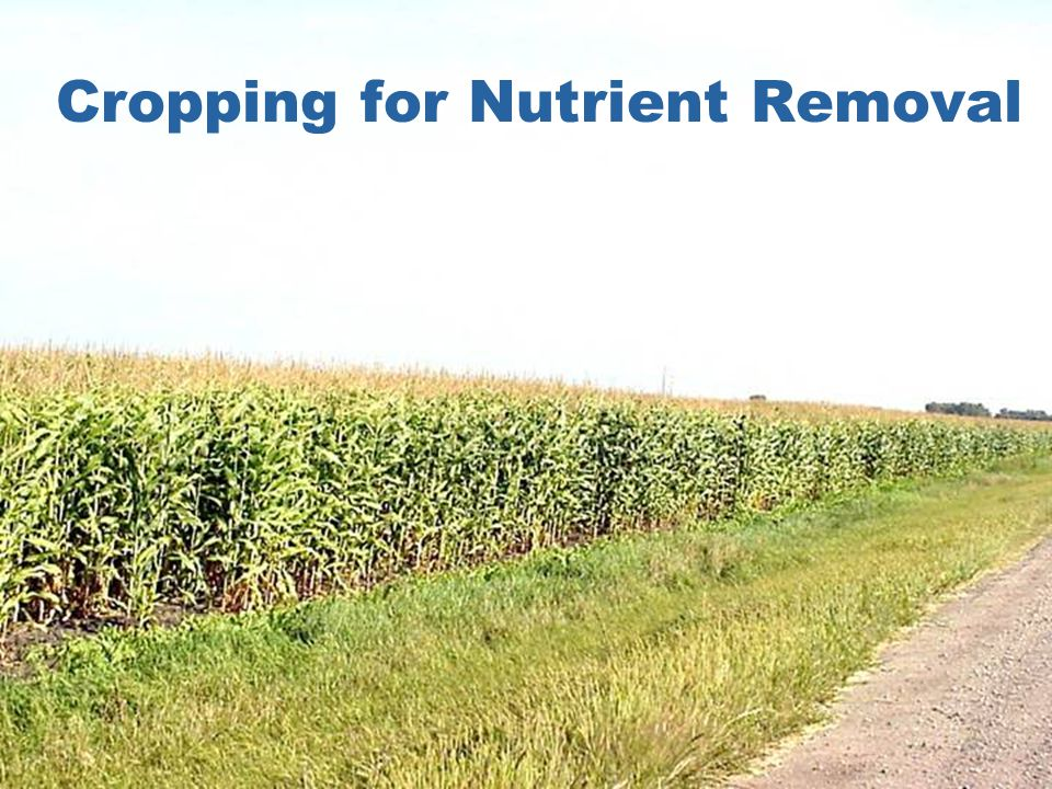 Cropping for Nutrient Removal