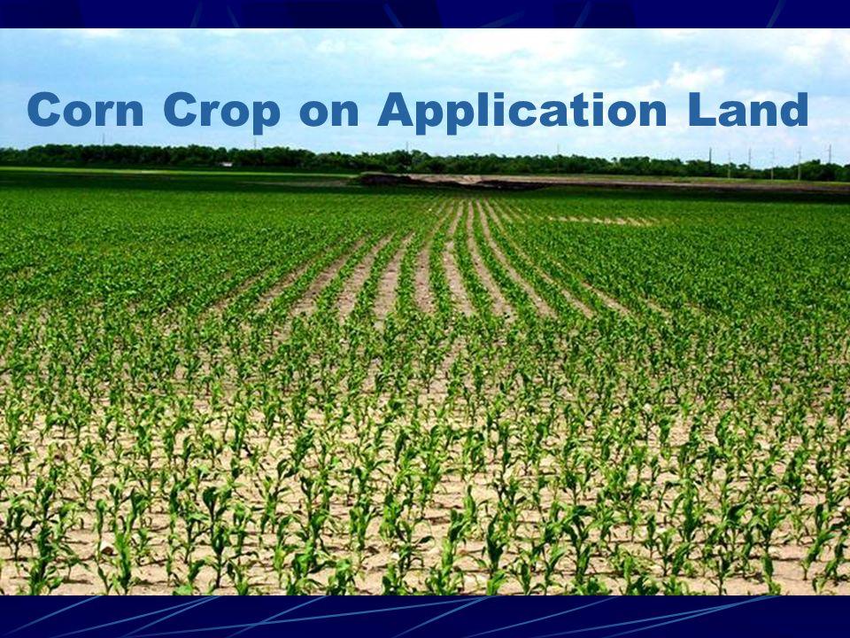Corn Crop on Application Land