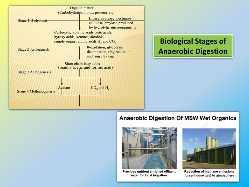 Biological Stages of Anaerobic Digestion