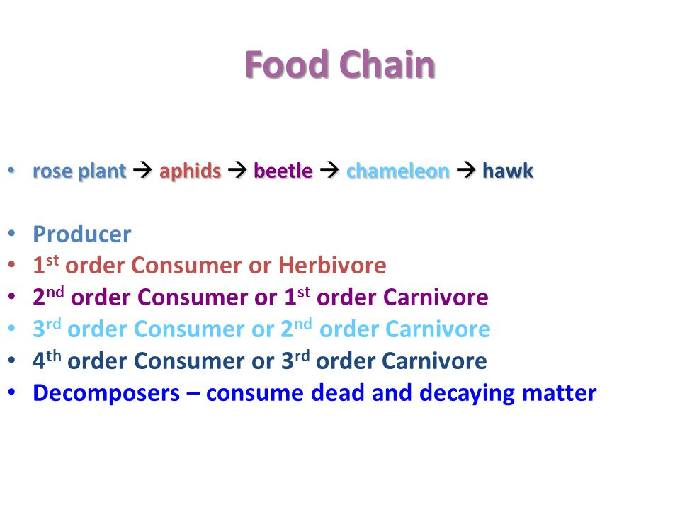 Food Chain rose plant  aphids  beetle  chameleon  hawk rose plant  aphids  beetle  chameleon  hawk Producer 1 st order Consumer or Herbivore 2 nd order Consumer or 1 st order Carnivore 3 rd order Consumer or 2 nd order Carnivore 4 th order Consumer or 3 rd order Carnivore Decomposers – consume dead and decaying matter