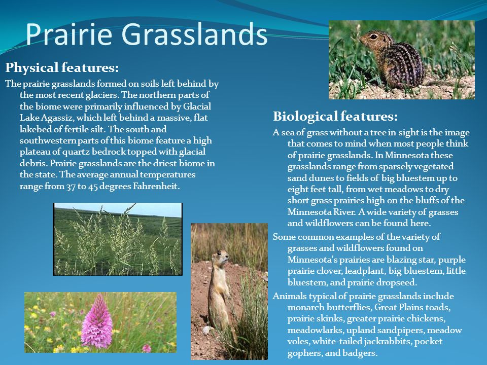 Prairie Grasslands Physical features: The prairie grasslands formed on soils left behind by the most recent glaciers.