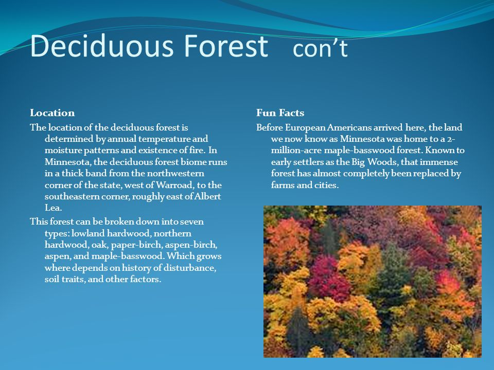 Deciduous Forest con't Location The location of the deciduous forest is determined by annual temperature and moisture patterns and existence of fire.