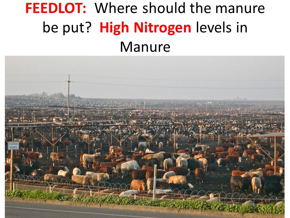 FEEDLOT: Where should the manure be put? High Nitrogen levels in Manure