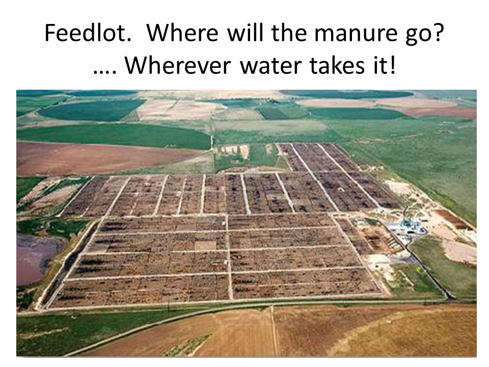 Feedlot. Where will the manure go? …. Wherever water takes it!