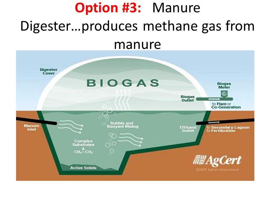 Option #3: Manure Digester…produces methane gas from manure