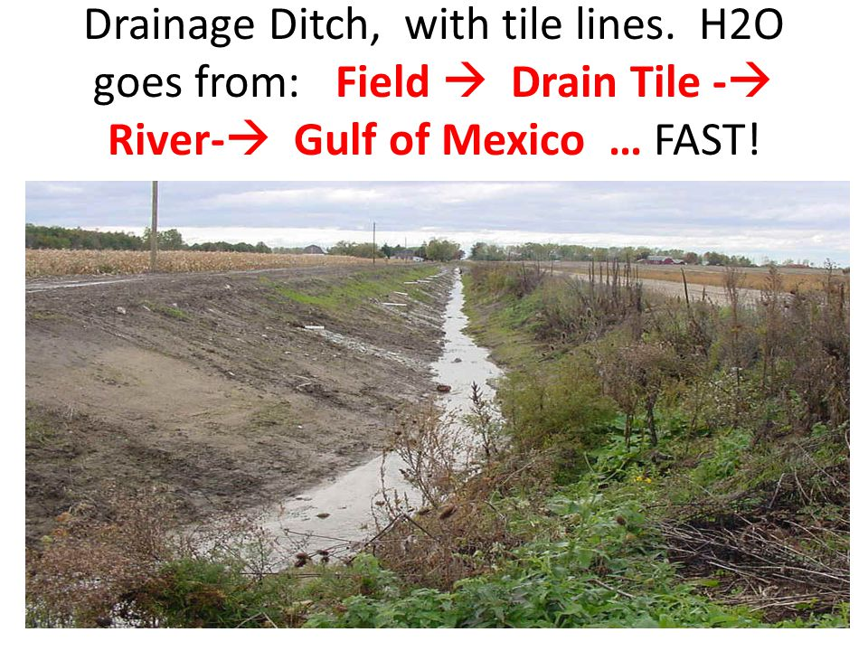 Drainage Ditch, with tile lines. H2O goes from: Field  Drain Tile -  River-  Gulf of Mexico … FAST!