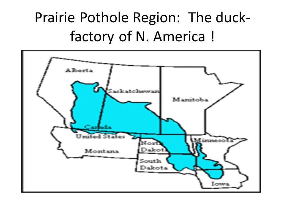 Prairie Pothole Region: The duck- factory of N. America !