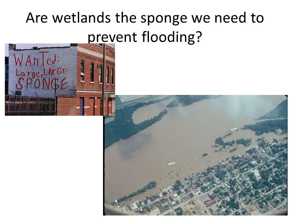 Are wetlands the sponge we need to prevent flooding