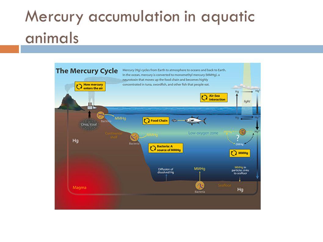 Mercury accumulation in aquatic animals