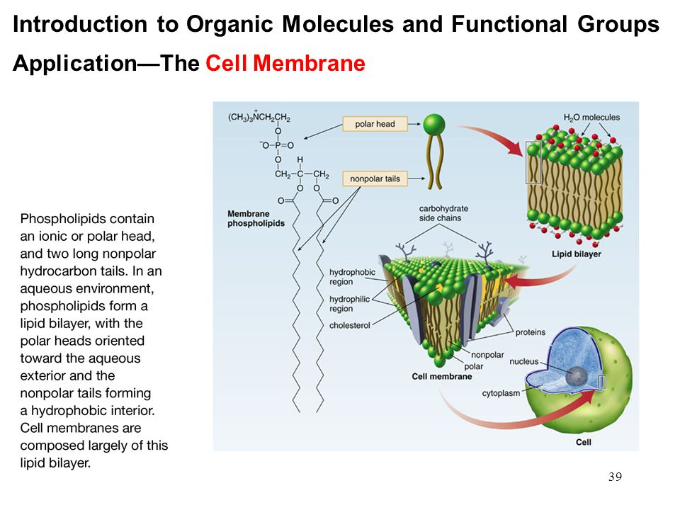 39 Introduction to Organic Molecules and Functional Groups Application—The Cell Membrane