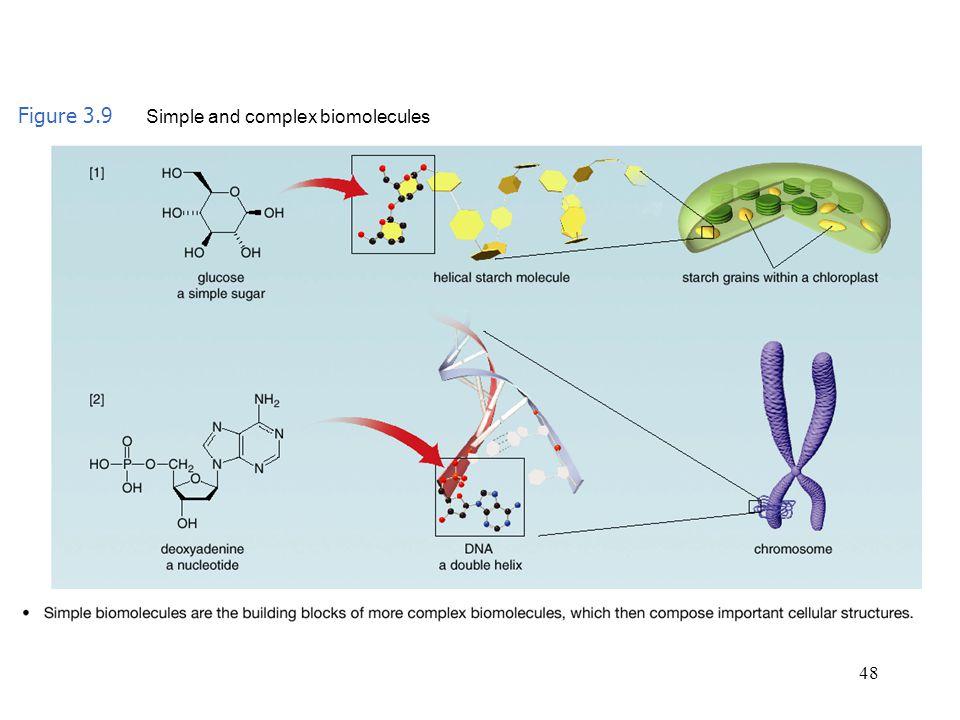 48 Figure 3.9 Simple and complex biomolecules