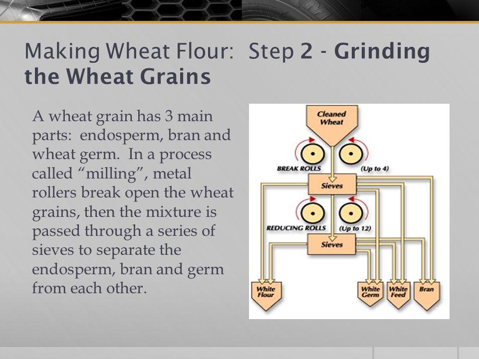 Making Wheat Flour: Step 2 - Grinding the Wheat Grains A wheat grain has 3 main parts: endosperm, bran and wheat germ.