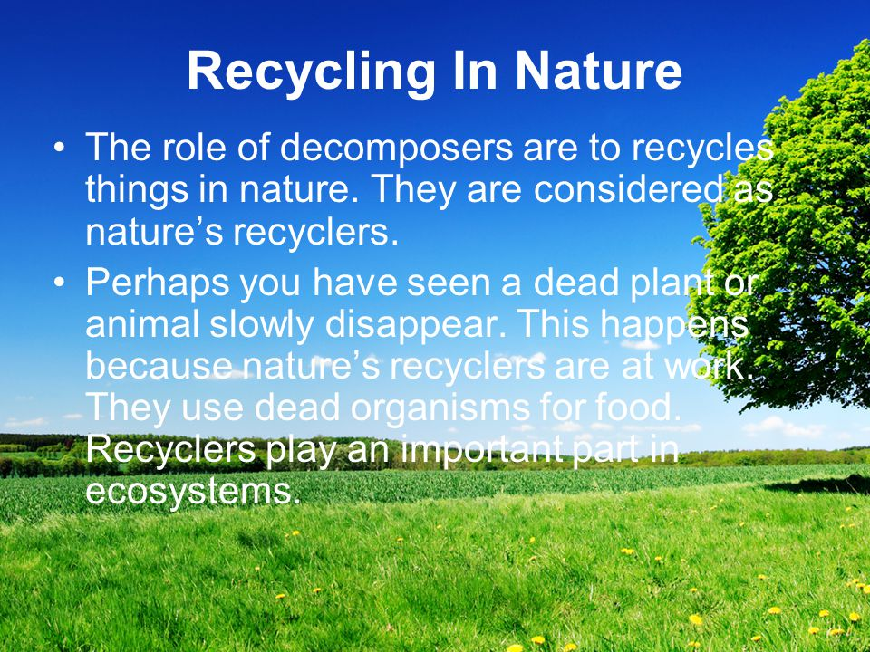Recycling In Nature The role of decomposers are to recycles things in nature. They are considered as nature's recyclers. Perhaps you have seen a dead