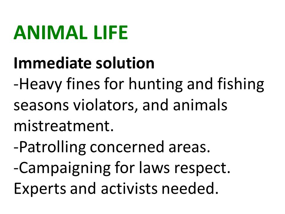 ANIMAL LIFE Immediate solution -Heavy fines for hunting and fishing seasons violators, and animals mistreatment.