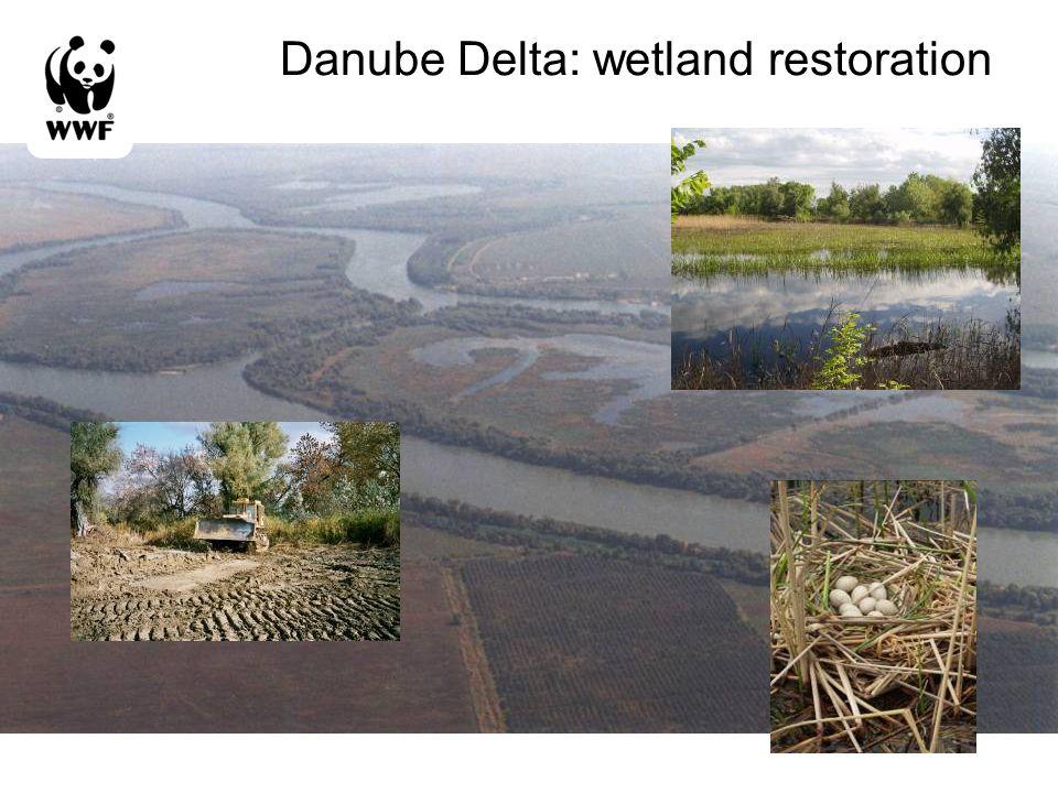 Danube Delta: wetland restoration