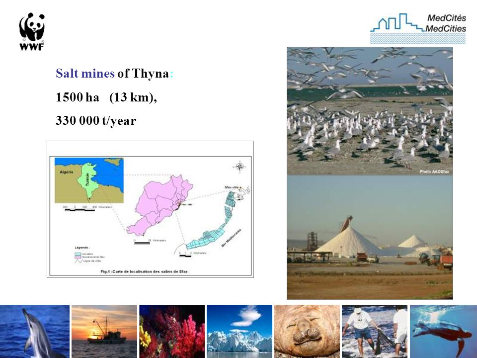 Salt mines of Thyna: 1500 ha (13 km), 330 000 t/year