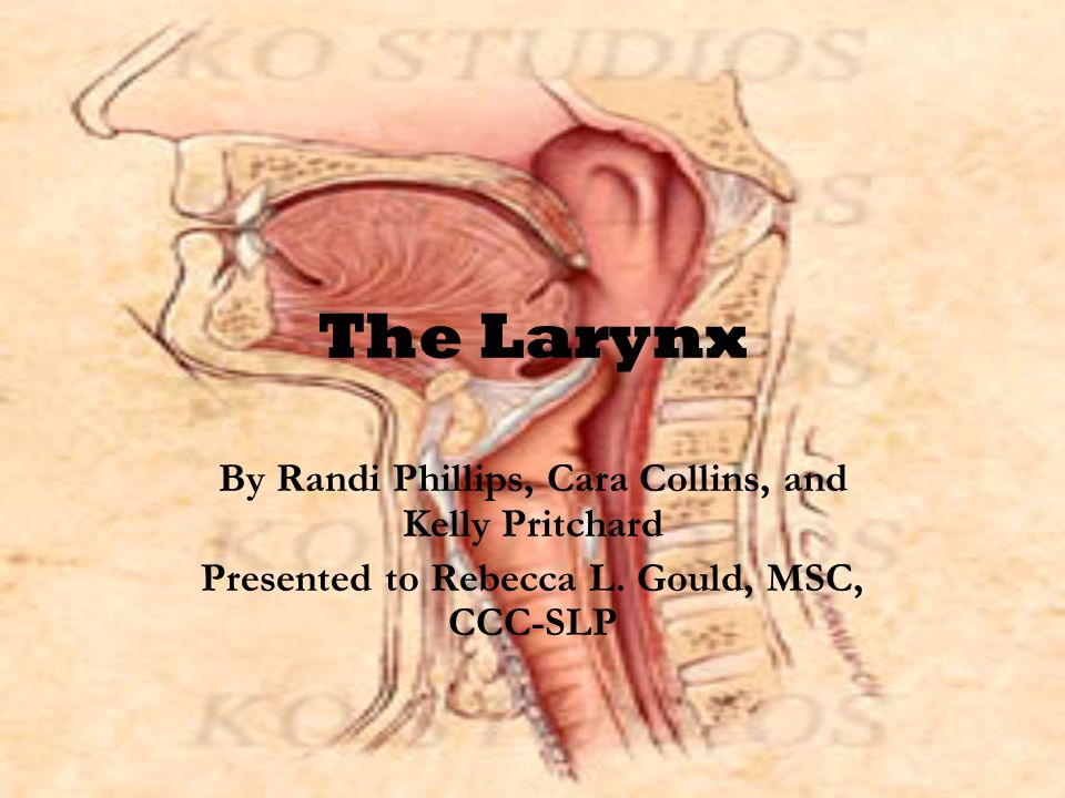 The Larynx By Randi Phillips, Cara Collins, and Kelly Pritchard Presented to Rebecca L.