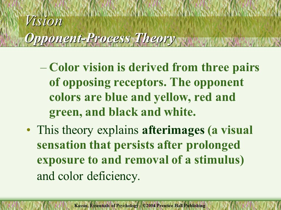 –Color vision is derived from three pairs of opposing receptors.