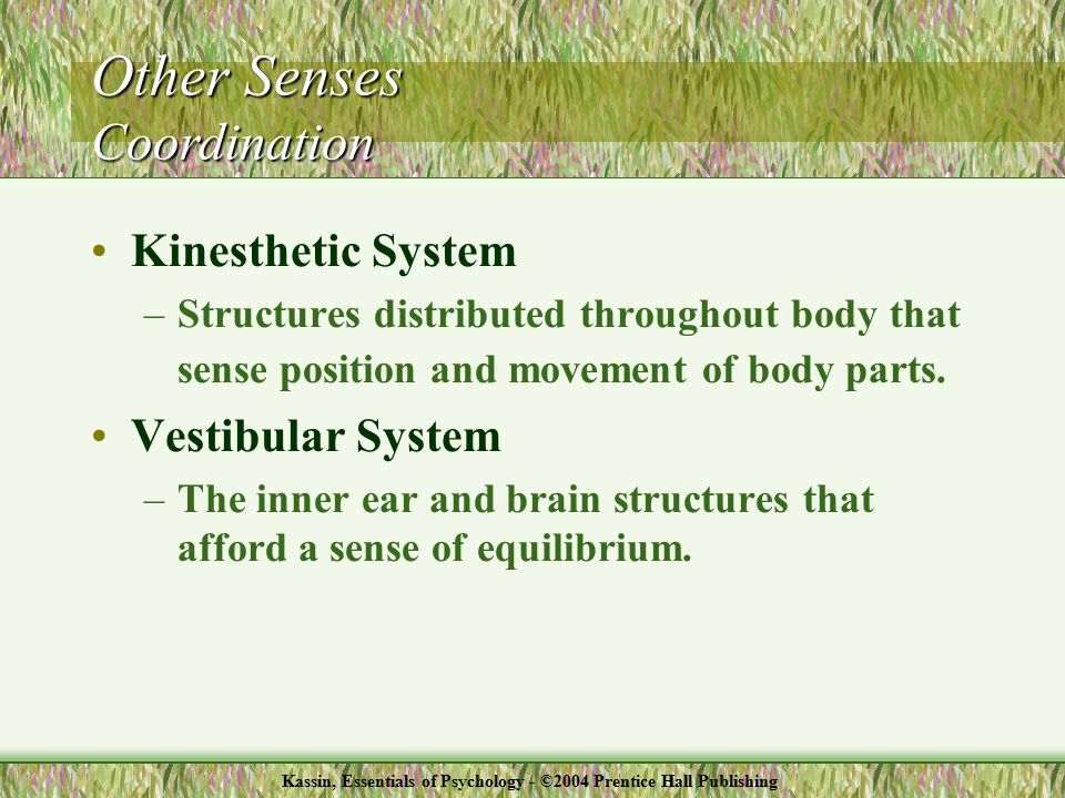 Kinesthetic System –Structures distributed throughout body that sense position and movement of body parts.