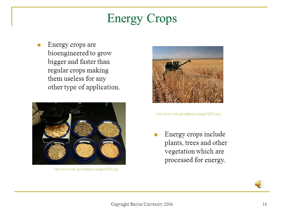 Copyright Baylor University 2006 16 Energy Crops Energy crops are bioengineered to grow bigger and faster than regular crops making them useless for any other type of application.
