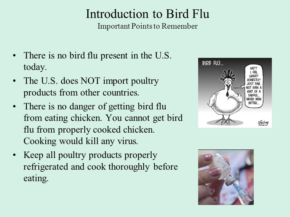 Introduction to Bird Flu Important Points to Remember There is no bird flu present in the U.S. today. The U.S. does NOT import poultry products from o