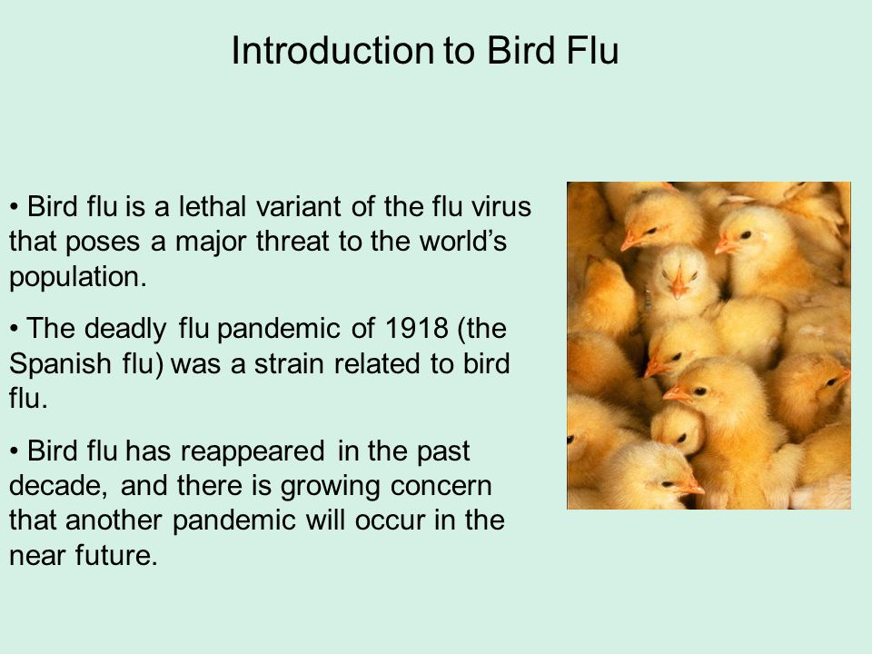 Bird flu is a lethal variant of the flu virus that poses a major threat to the world's population. The deadly flu pandemic of 1918 (the Spanish flu) w