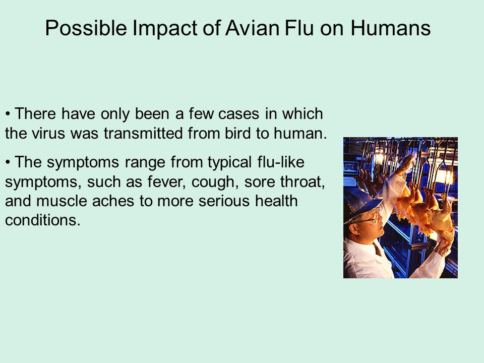 Possible Impact of Avian Flu on Humans There have only been a few cases in which the virus was transmitted from bird to human. The symptoms range from