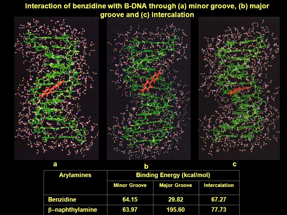 Interaction of benzidine with B-DNA through (a) minor groove, (b) major groove and (c) intercalation a b c ArylaminesBinding Energy (kcal/mol) Minor G