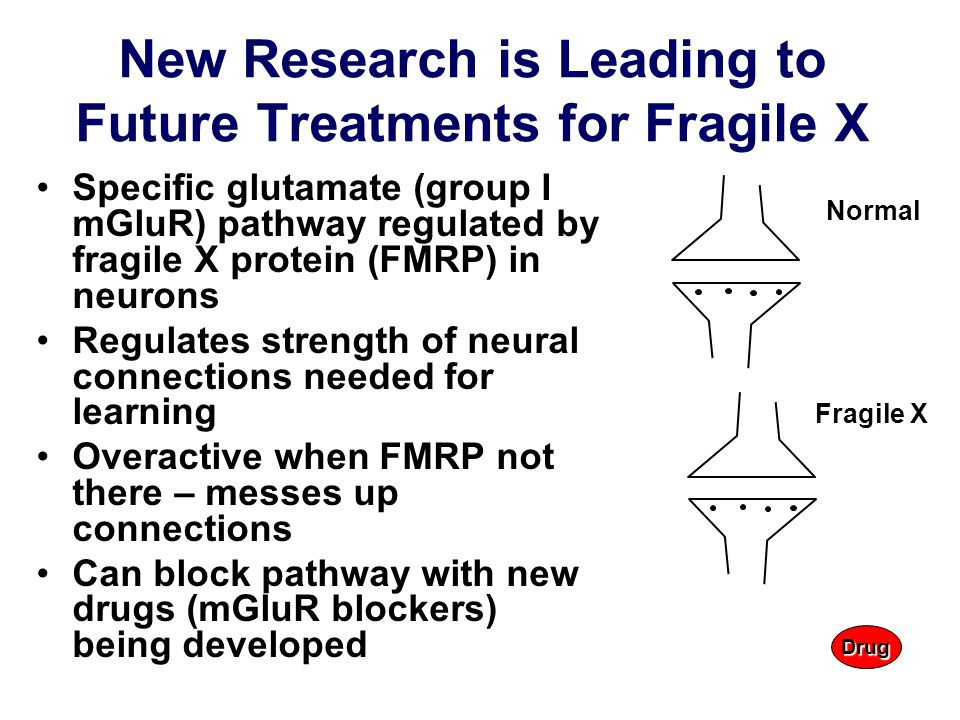 New Research is Leading to Future Treatments for Fragile X Specific glutamate (group I mGluR) pathway regulated by fragile X protein (FMRP) in neurons