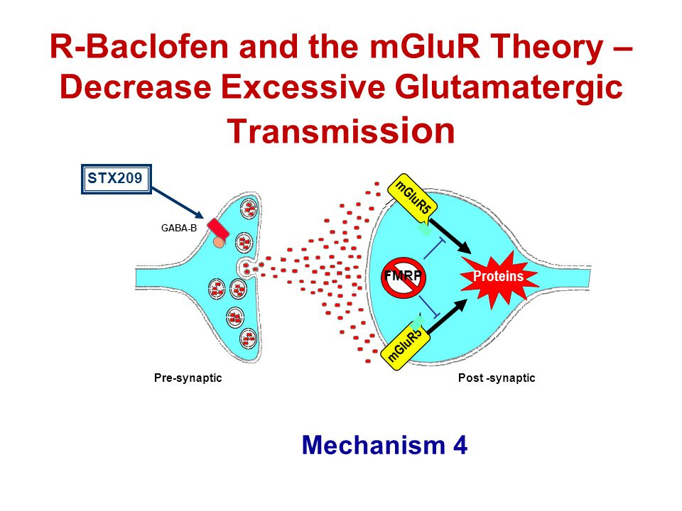 R-Baclofen and the mGluR Theory – Decrease Excessive Glutamatergic Transmis sion Pre-synapticPost -synaptic mGluR5 Proteins FMRP Proteins GABA-B STX20